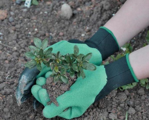 перчатки сад земля