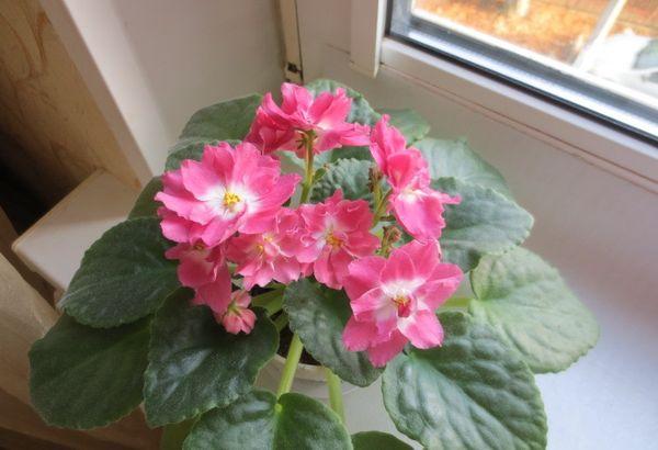 Как ухаживать за цветком
