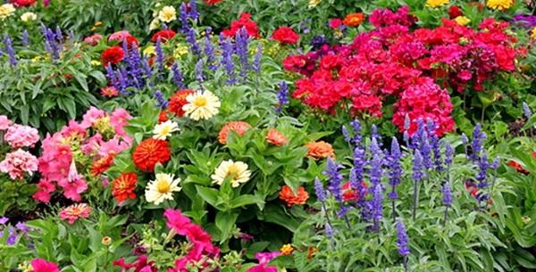 Картинки по запросу цветы двулетние и многолетние