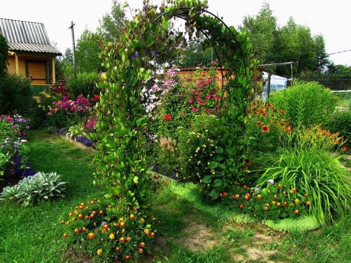 арка из цветов кобеи на садовом участке