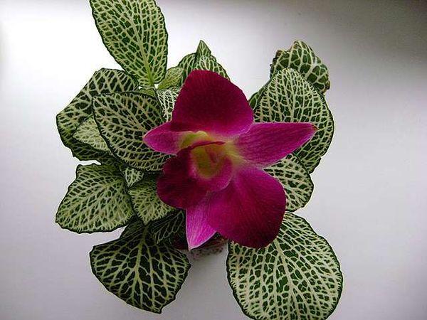 Если делать процедуру омоложения - цветок выглядит очень привлекательно