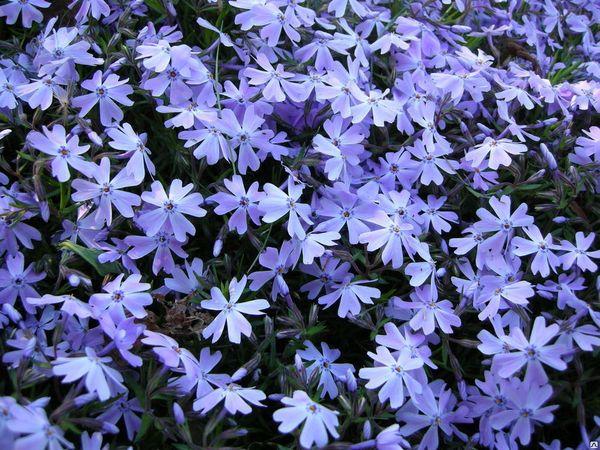 Esmerald Blue