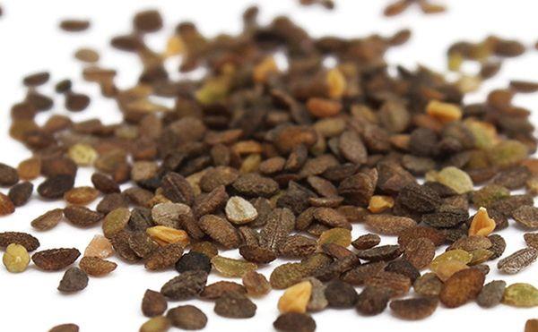 Семена шлокса шиловидного