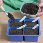 Семена на рассаду высеиваются в грунт