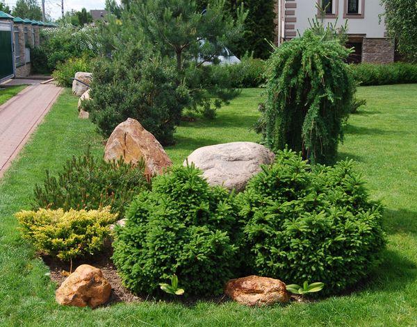 Где лучше сажать хвойники в саду 83