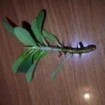Верхушка стебля для размножения
