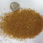 Семена кортадерии