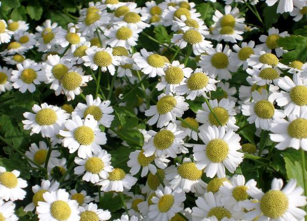 Фото цветов на что то похожее