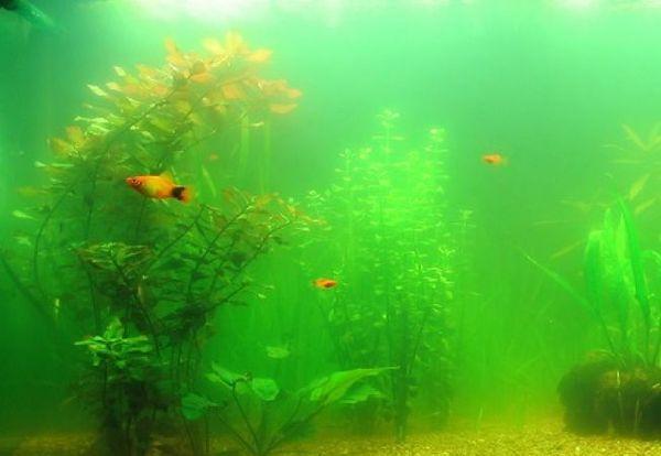 Аквариумная вода содержит полезные для роста вещества