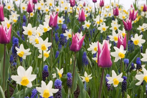 Сочетание однолетних и многолетних цветов