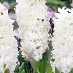 Белый Snow Crystal