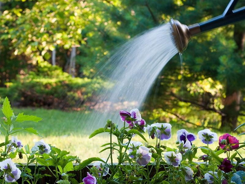 Поливать растения рекомендуется в благоприятные для этого дни чтобы сохранить их цветущий вид