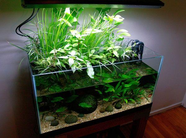 цветок аквариум