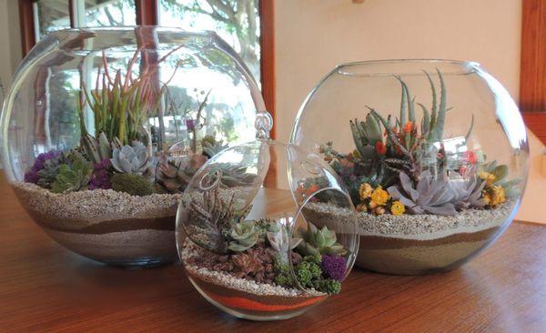 Какие цветы можно выращивать в аквариуме без воды?