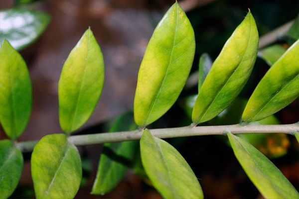желтеет листва
