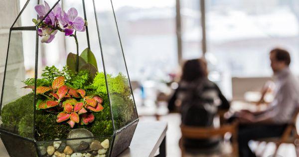 Цветок в аквариуме