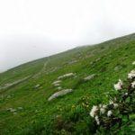 Девственные горы Кавказа и цветы рододендрона