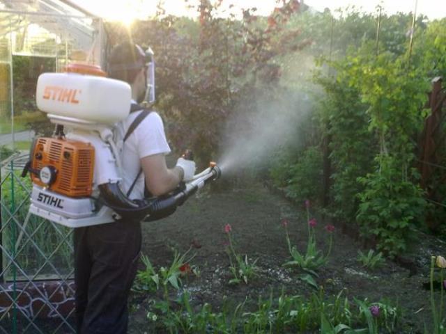 Обработка эпином садового участка
