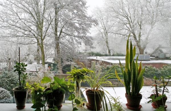 Готовить растения к зимнему режиму следует постепенно