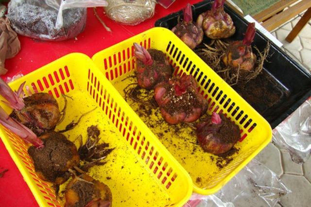 Хранение луковиц в коробочках в погребе