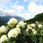 Цветы в горах Кавказа