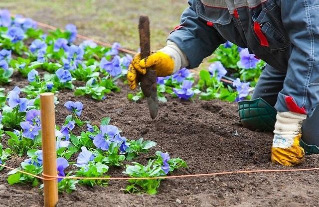 Подготовка почвы и пересадка цветов только на растущую фазу, иначе они будут дольше приживаться