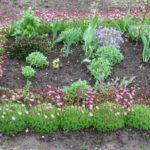 Оформление цветника с помощью Камнеломки Арендса