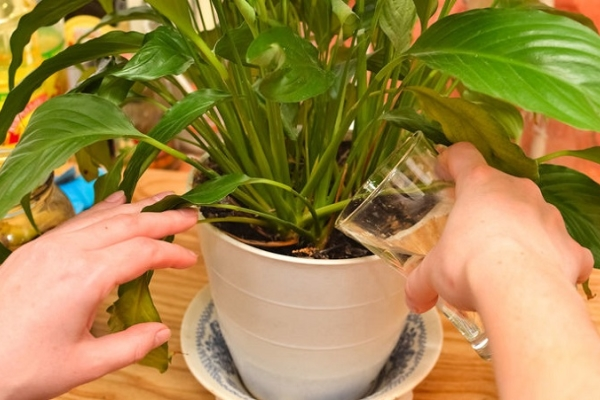 Подкормка полезна и необходима не только комнатным растениям, но и садовым цветам и овощным растениям