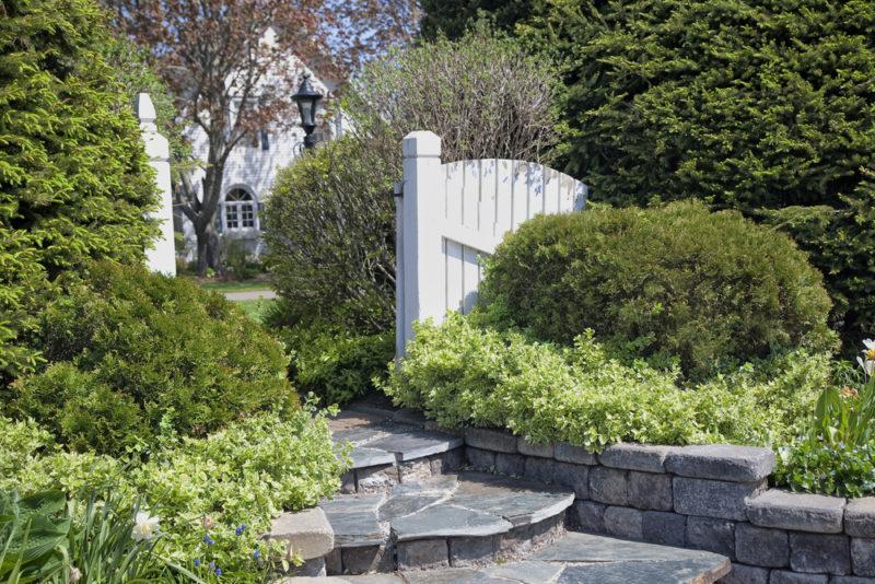 Садовая композиция с бересклетом