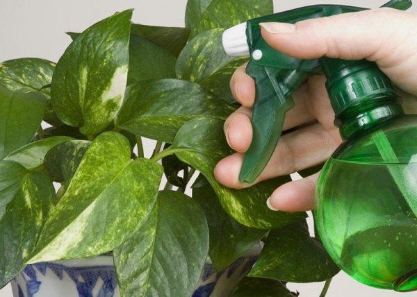 В декабре рекомендуется опрыскивать растения или использовать увлажнители, чтобы повысить влажность