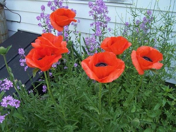 возле дома в саду
