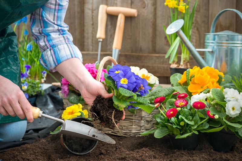 Как мы сажали цветы в городе 42