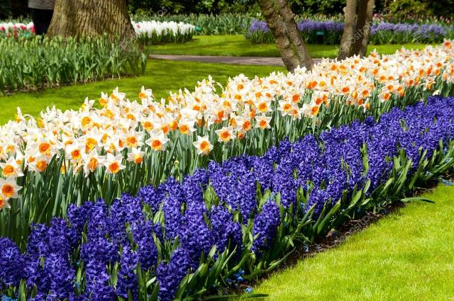 Живая изгородь из цветов