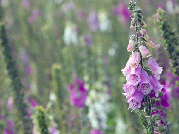 После полива или дождя следует неглубоко и осторожно разрыхлить почву вокруг растений