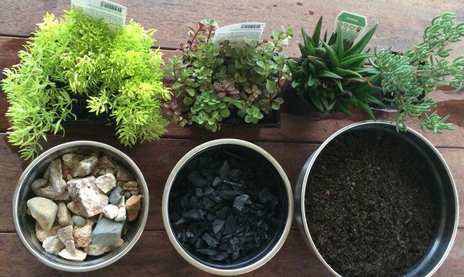 Горшки с разными видами дренажа для разных растений