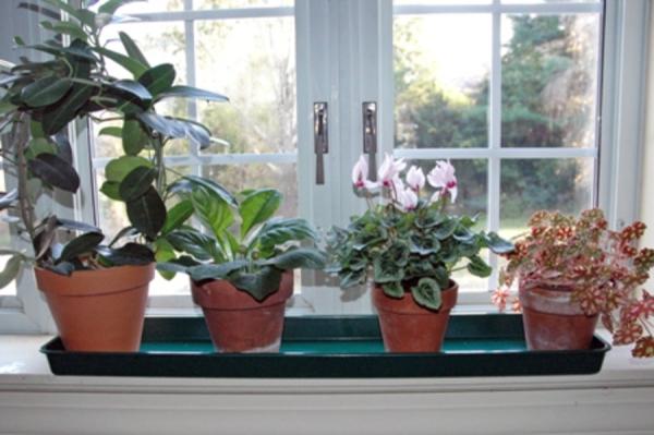 При проветривании помещения важно защитить растения от замораживания