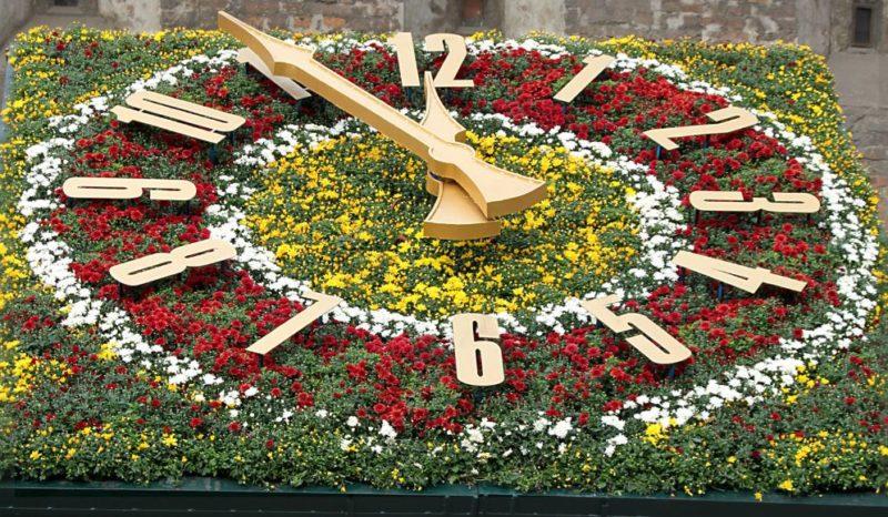 Цветочные часы с циферблатом