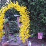 Декоративная арка с цветками форзиции