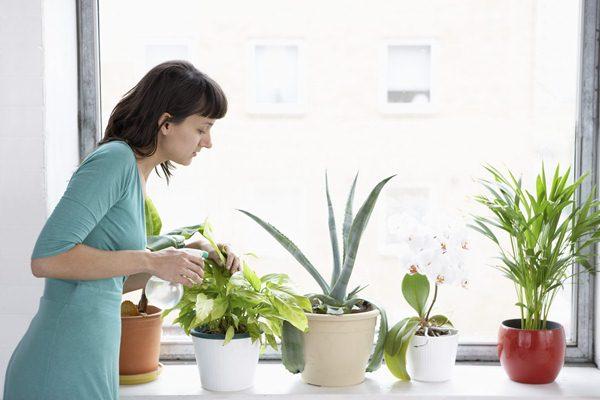 Чем поливать цветы в домашних условиях 857
