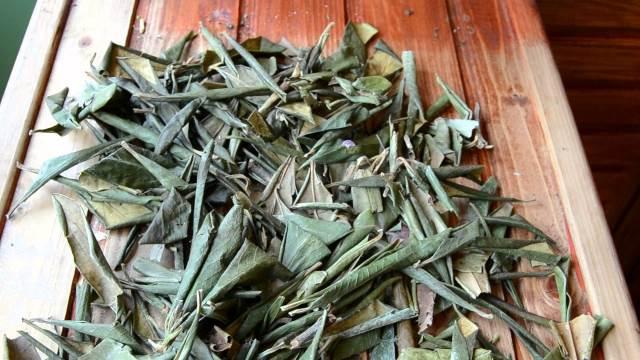 Сушеные листья рододендрона для заваривания чая