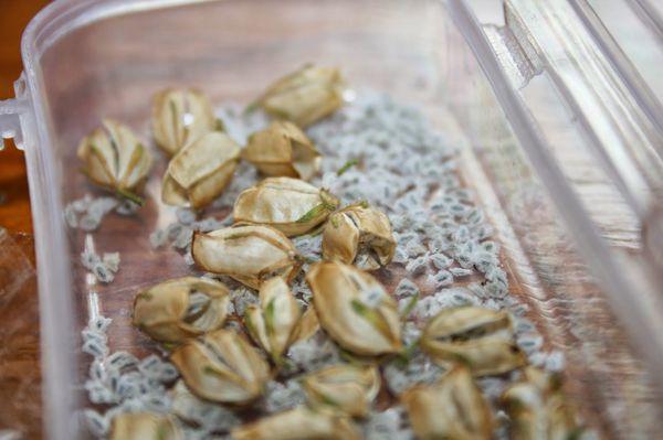 Семена немезии