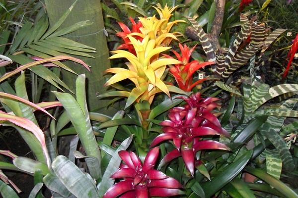 Тропический цветок в дикой природе