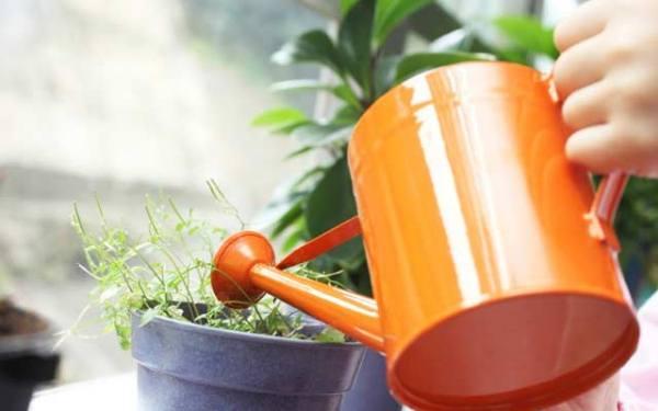Частота поливов в зимний период зависит от условий содержания и от вида растения