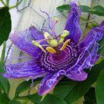 Крупные красивые цветки