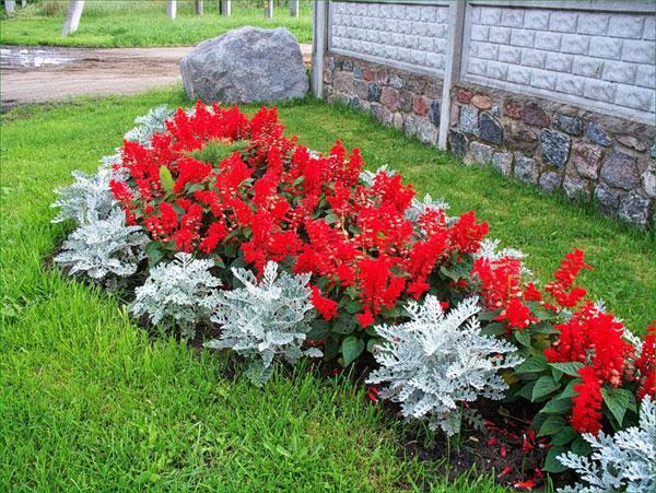 пример использования сальвии в составлении цветочных композиций