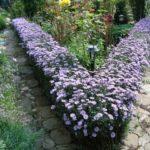Живая изгородь из цветов незабудки